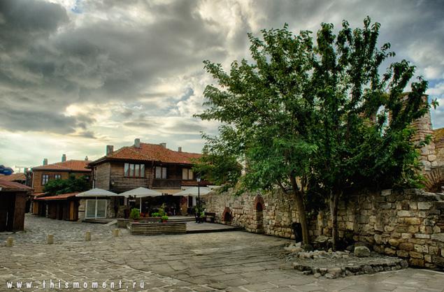 Дерево в городе